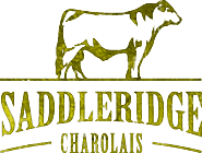 Saddleridge Charolais